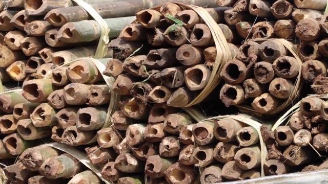 vídeos de stock, filmes e b-roll de el gobierno de mozambique lucha contra el lucrativo comercio ilegal de madera de sus bosques prohibiendo la exportacion de troncos sin procesar para... - madera material