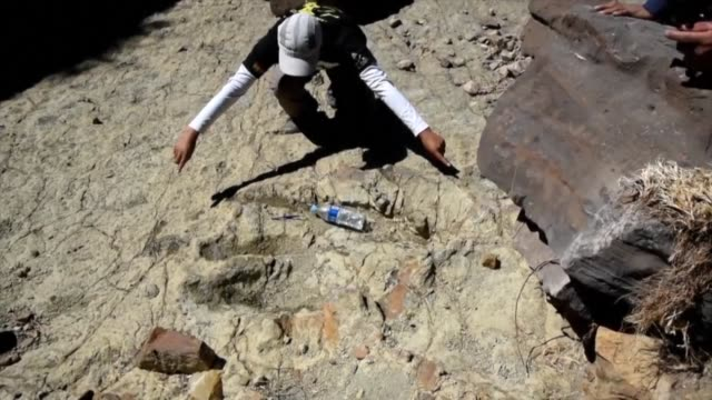 El hallazgo en Bolivia de lo que podria ser la huella de un dinosaurio teropodo abelisaurio uno de los más grandes del planeta entusiasma a los...