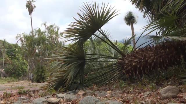 el jardín botanico de caracas sufre los efectos de la falta de agua que se agravo por los apagones que afectan al pais desde marzo - agua stock videos & royalty-free footage