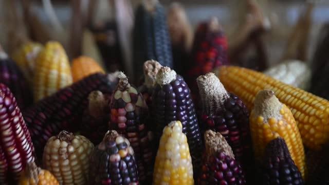 stockvideo's en b-roll-footage met son semillas nativas que han desafiado al cambio climático y, para apoyarlas, en el salvador decidieron hacerles un 'back up - agricultura