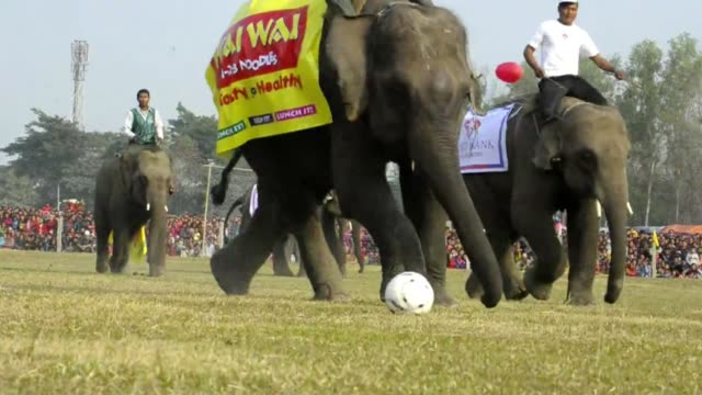 el tradicional festival de elefantes de chitwan en nepal muestra una desconocida faceta deportiva de los paquidermos que se miden en carreras... - festival tradicional stock videos & royalty-free footage