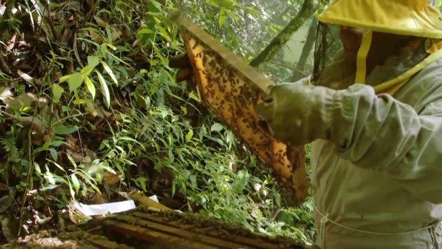 el uso de pesticidas contra las plagas de los campos de coca asi como el cambio climatico y otros factores amenazan la supervivencia de las abejas en... - insecticide stock videos & royalty-free footage