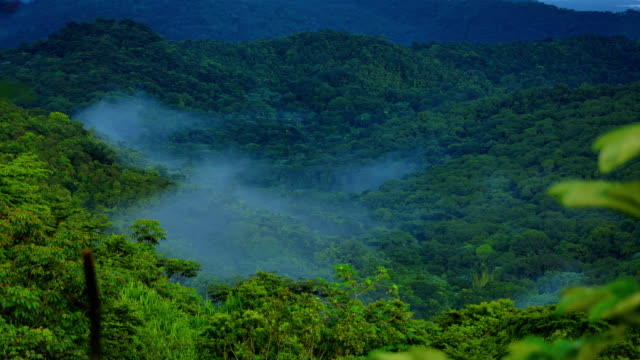 el yunque national forest, puerto rico - dramatic landscape stock videos and b-roll footage