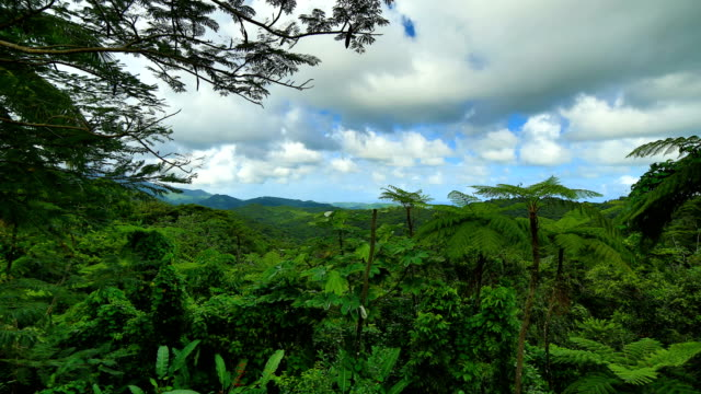 el yunque national forest, puerto rico - puerto rico stock videos and b-roll footage