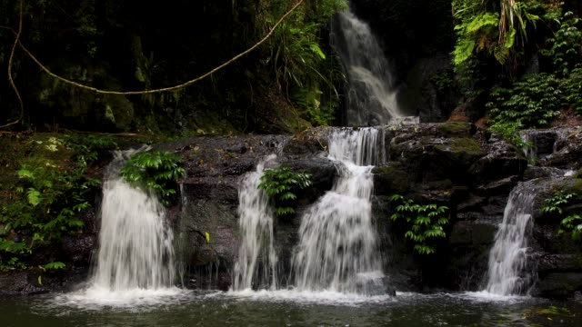 elabana falls - 4k footage of rainforest waterfall in lamington national park australia - national park stock videos & royalty-free footage