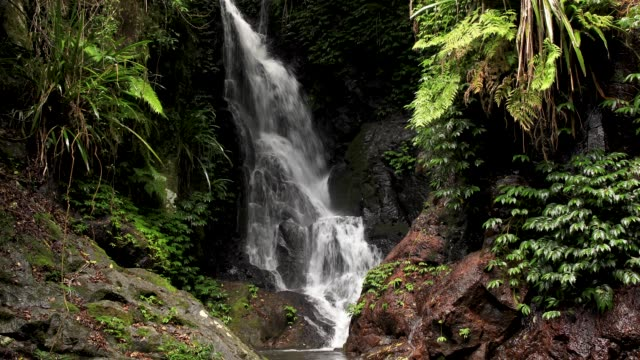elabana falls - 4k footage of rainforest waterfall in lamington national park australia - waterfall stock videos & royalty-free footage