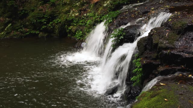 Elabana Falls - 4K Footage Of Rainforest Waterfall in Lamington National Park Australia