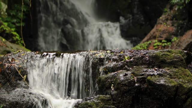 stockvideo's en b-roll-footage met elabana falls-4k beelden van regenwoud waterval in lamington national park australië - stroom stromend water