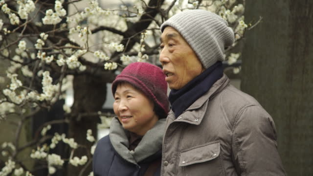 elderly couple poses for photo near plum blossom tree - japan - woolly hat stock videos and b-roll footage