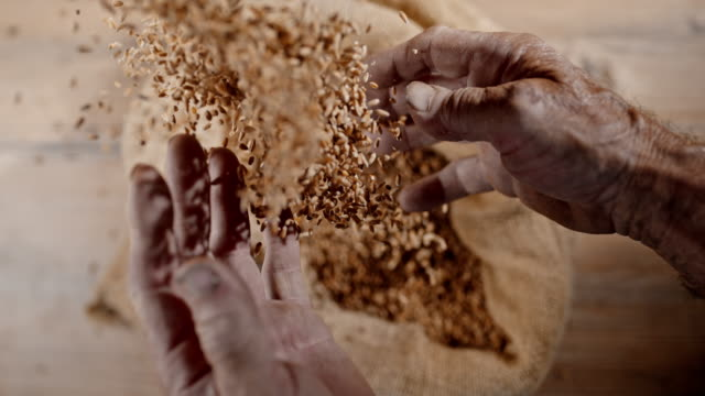 slo mo elderly hands cupping wheat grains - bag stock videos and b-roll footage
