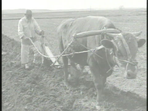 elderly korean farmer plowing soil w/ mule korea country rural farmland - mule stock videos & royalty-free footage