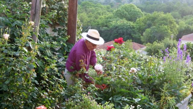 stockvideo's en b-roll-footage met oudere man het verzorgen van zijn tuin - 70 79 jaar