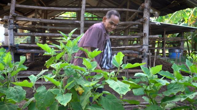 vídeos y material grabado en eventos de stock de personas mayores recogiendo verduras en el jardín de la cocina - oficio agrícola