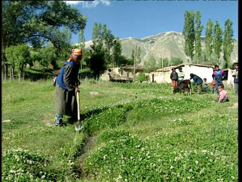 stockvideo's en b-roll-footage met elderly woman clears irrigation channel in grassy field as children look on tajikistan - werkdier