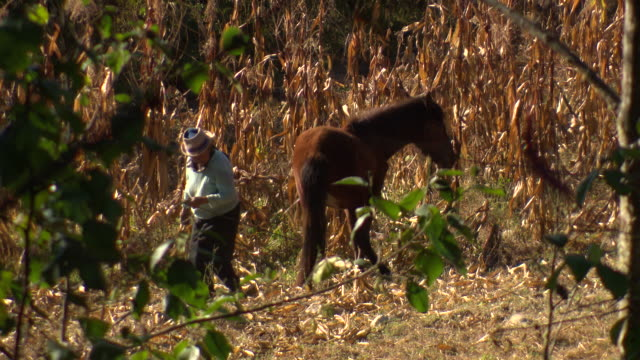 """elderly woman directing horse with rope, through foliage, crops growing behind, rural amazonas region of peru [perãº]"" - rope stock videos & royalty-free footage"