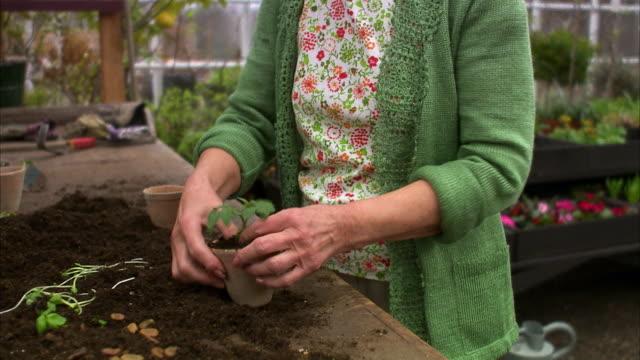 Elderly woman pots a plant Stockholm Sweden.