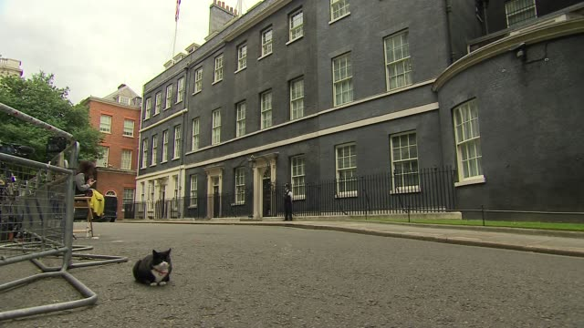 downing street departures / ruth davidson arrival england london downing street ext palmerston the cat seated then along / natalie evans departs no... - andrea leadsom stock-videos und b-roll-filmmaterial
