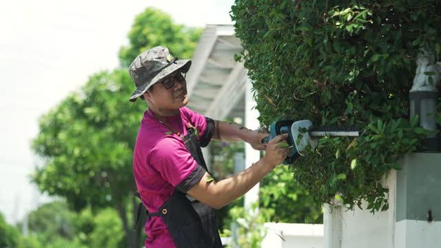 electric garden scissors trimming green hedges work in the garden - beskära bildbanksvideor och videomaterial från bakom kulisserna