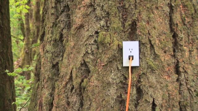 vídeos y material grabado en eventos de stock de cu zo electrical outlet plugged into tree in forest, battle ground, washington, usa - menos de diez segundos