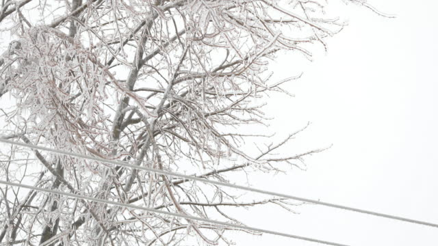 electricity cables covered in ice after ice storm in winter - frost stock videos & royalty-free footage