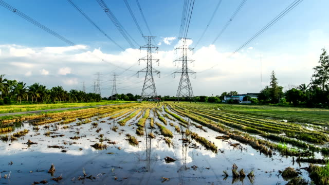 electricity high voltage power pylon in paddy field - high voltage stock videos and b-roll footage