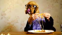 Elegant dog eating with human hands