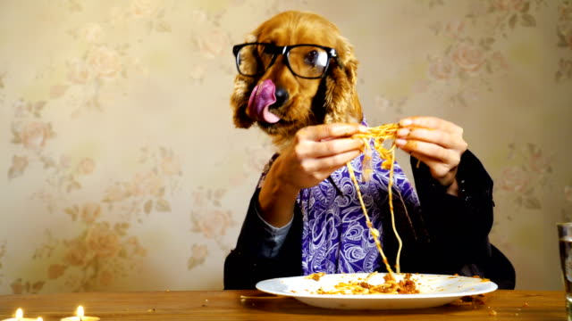 elegant dog eating with human hands - dog hair stock videos and b-roll footage
