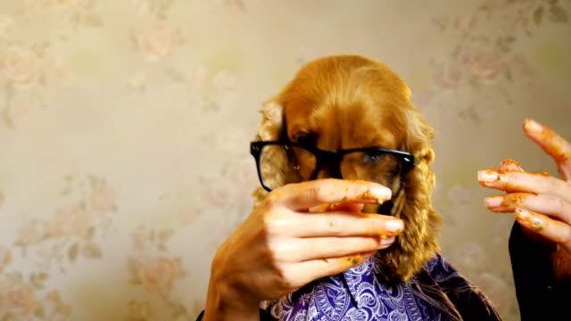 vídeos de stock e filmes b-roll de elegant dog eating with human hands - vestir se