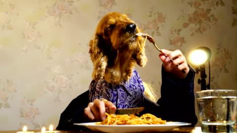 vidéos et rushes de chien élégant, manger avec les mains humaines - humour