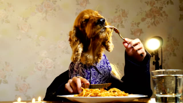 vídeos de stock e filmes b-roll de elegant dog eating with human hands - fantasia