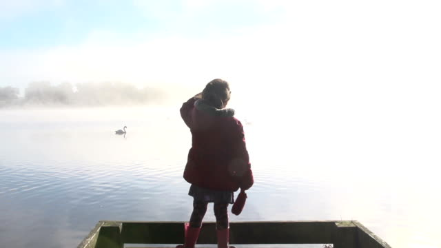 elegant swans on a misty lake - formal glove stock videos and b-roll footage