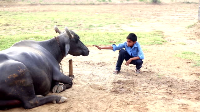 elementary age boy portrait with water buffalo - teenage boys stock videos & royalty-free footage