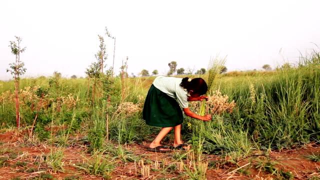 vidéos et rushes de fille d'âge élémentaire jouant en plein air dans la nature - working girl