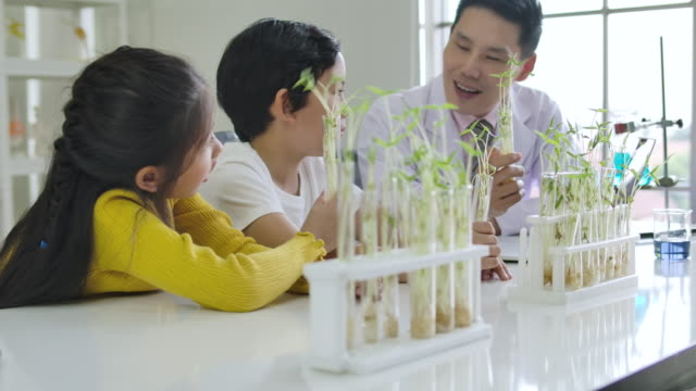 elementary school science classroom: asian children in scientist uniform learning plant in tube glass on the table. - males stock videos & royalty-free footage