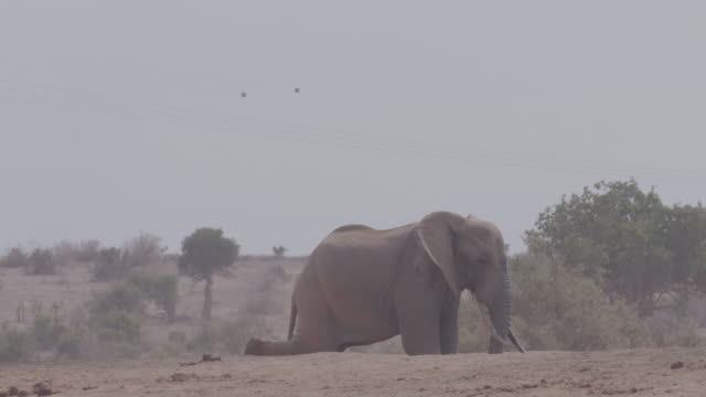 vidéos et rushes de elephant / africa - digging