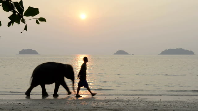 A elephant and his guide is walking at sunset on the beach