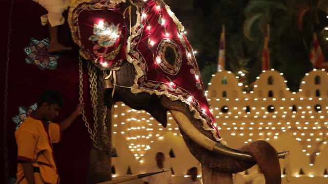 stockvideo's en b-roll-footage met ms ts elephant and mahout taking part in buddhist festival or procession 'esala perahera' in front of 'temple of tooth' audio / kandy, central province, sri lanka - sri lankaanse cultuur