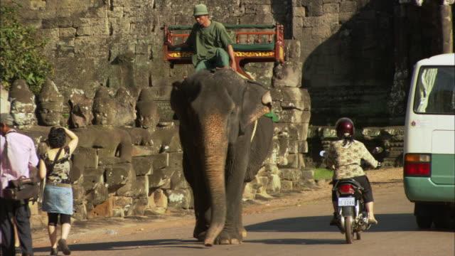 ms zo elephant and traffic near angkor wat gate / angkor, cambodia - ペディキャブ点の映像素材/bロール