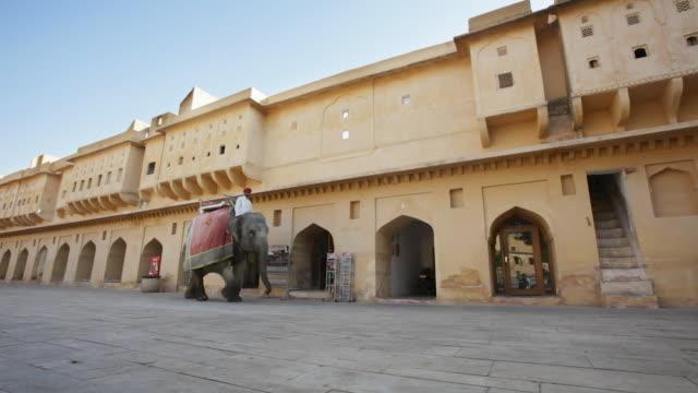 ms elephant at amber fort / jaipur, rajasthan state, india - arbetsdjur bildbanksvideor och videomaterial från bakom kulisserna