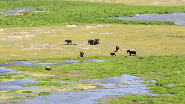 Elephant at Amboseli Lake