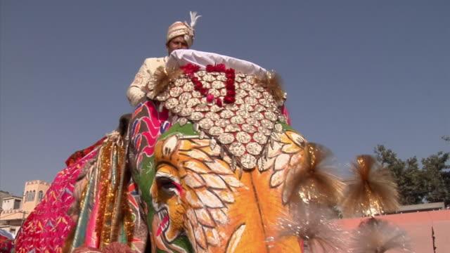 CU, Elephant (Elephas maximus) at annual elephant festival, Jaipur,Rajasthan, India