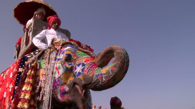 cu, la, elephant at jaipur elephant festival, jaipur, rajasthan, india - domestic animals stock videos & royalty-free footage