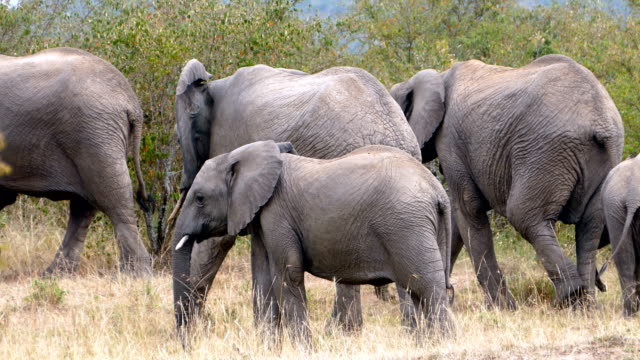 elephant at wild - animals in the wild stock videos & royalty-free footage