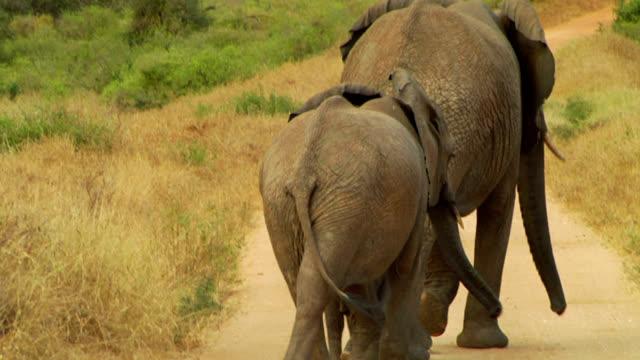 象の赤ちゃん - ゾウ点の映像素材/bロール