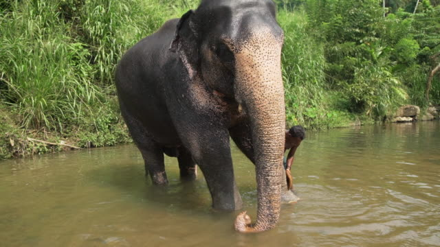 Elephant being washed up by man at Sri Lanka