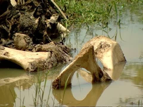 cu elephant bones in water - pelvis stock videos & royalty-free footage
