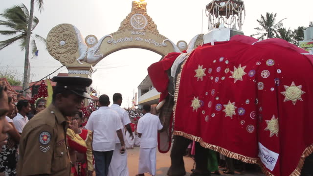 ms pan elephant carrying sacred relic parades in seenigama annual perahern parade in buddhist procession / sinigama, southern province, sri lanka - sri lankan culture stock videos & royalty-free footage
