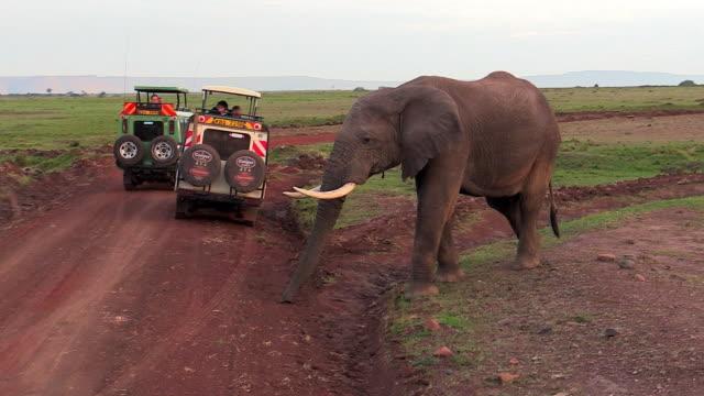 elephant crossing road behind two safari vehicles, kenya - schotterstrecke stock-videos und b-roll-filmmaterial