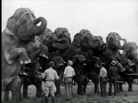 b/w elephant doing circus, florida / audio - circus stock videos & royalty-free footage