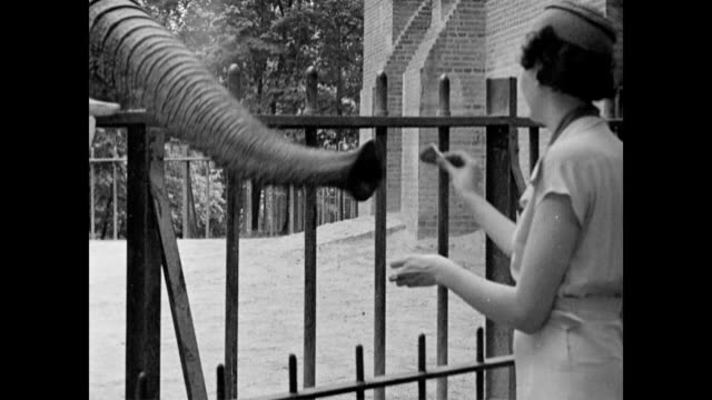 elephant eating peanut from woman's hand at the zoo / little girl playing with cheetah cubs at the zoo washington dc zoo on january 01 1936 in... - peanut food stock videos & royalty-free footage